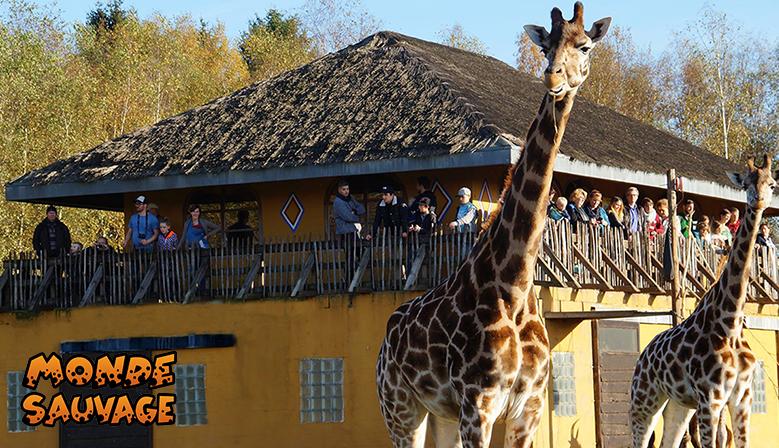 Het observatorium van de giraffen