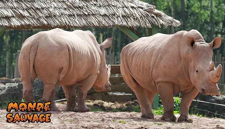 Nos rhinocéros