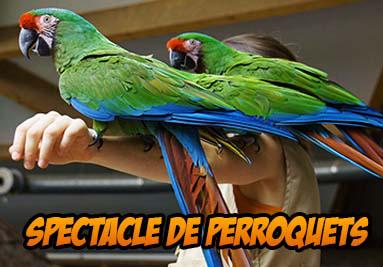 Spectacle des Perroquet