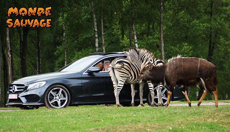 De afrikaanse safari